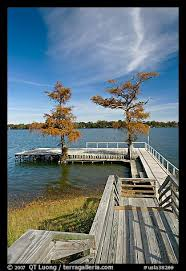 picture photo deck and bald cypress on lake providence louisiana