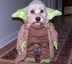 star wars dog halloween costumes 15 adorable animals dressed up in u0027star wars u0027 costumes what the