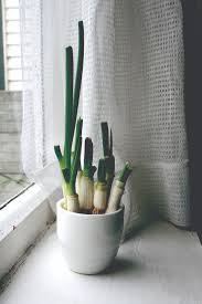 indoor gardening for a year round harvest the sunriseguide