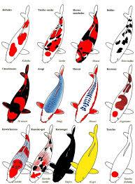 25 koi ideas koi carp koi art watercolor