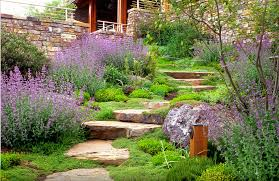 drought tolerant landscaping ideas flowers u2014 home ideas collection