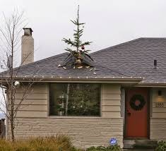Christmas Tree Stop - how do you stop a christmas tree from growing the garden of eaden