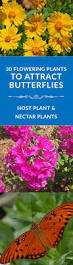 native plants list 12 best wildflowers of mississippi images on pinterest