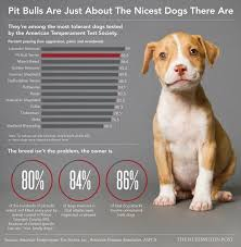 american pitbull terrier 4 weeks how to raise a pitbull tips from one owner to another