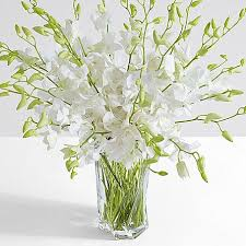 Orchid Cut Flowers - deluxe white dendrobium orchids
