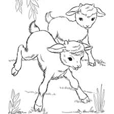 farm animal coloring pages printable baby goats coloring page