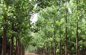 willow tree meaning in tamil best tree 2017