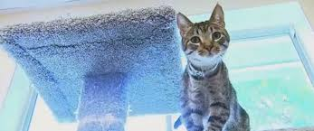 Cat Under Faucet Shelter Cats Turn On Sink Faucet Cause 5k In Damage To Florida