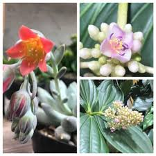 Indoor Fragrant Plants - indoor sun shoppe seattle home page