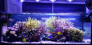 led reef lighting reviews led lighting for aquarium aquarium led lighting reviews 2013