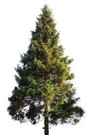 custom trees museum trees