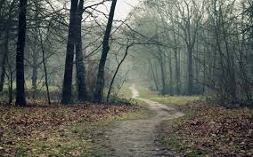in the woods 1280x800 a path in the woods in autumn desktop pc and mac wallpaper