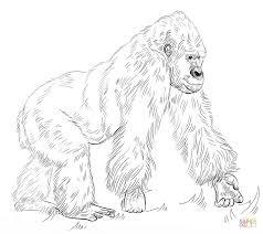 silverback gorilla coloring free printable coloring pages