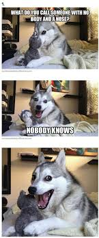 Pun Husky Meme - 7 pun dog puns that will instantly brighten your day that s funny
