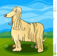 afghan hound attack afghan stock illustrations u2013 647 afghan stock illustrations