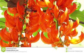 Tropical Climbing Plant - video orange burn exotic tropical flower hanging climbing plants
