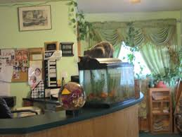 Fish Tank Desk by Front Desk U0026 Dining Area With Cat Drinking Out Of Fish Tank