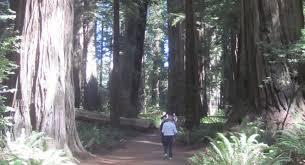 big trees in california san diego reader