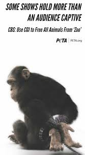 why is there a handcuffed chimpanzee in newspapers across the