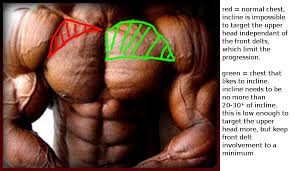 decline bench press muscles does incline bench press build upper chest muscles