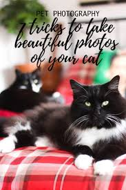 69 best pet dog cat tips images on pinterest dog cat pet