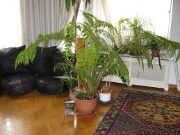 enhance your home decor with decorative plants ideas 4 homes