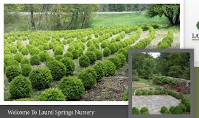 Real Topiary Trees For Sale - north carolina nursery boxwood shrubs for sale