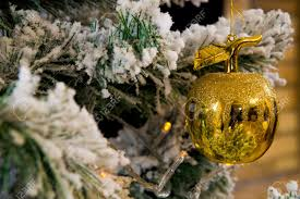 close up of golden apple hanging on branch of christmas fir tree