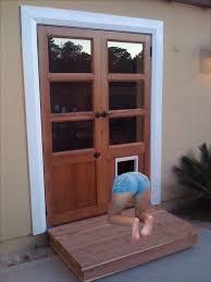 Pet Ready Exterior Doors by Daisy U0027s Dog Door Drama By Haitanihamarikomimas On Deviantart