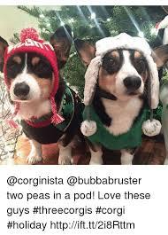 Two Peas In A Pod Meme - as two peas in a pod love these guys threecorgis corgi holiday