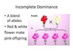 nonmendelian genetics 6f incomplete codominance u0026 blood types