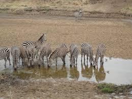 safari mar tours and safaris ltd u2013 home