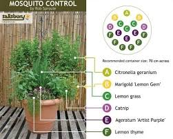 mosquito plants how to repel mosquitoes naturally using just plants oils home