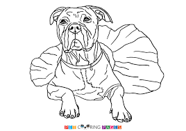 american pitbull terrier c american pit bull terrier coloring page