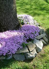 building a flower beds around a tree can add a beautiful and neat