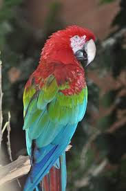 Exotic Theme 277 Best Tropical Exotic Birds Images On Pinterest Beautiful