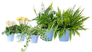 plante d駱olluante chambre le pouvoir des fleurs plantes dépolluantes