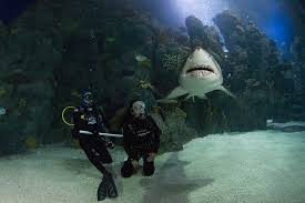 Colorado snorkeling images Dive with the sharks dive the downtown aquarium with a 1 scuba jpg