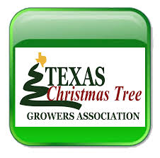 texas christmas tree farms