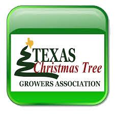 texas christmas tree farms