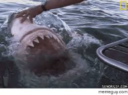 Jaws Meme - gettin real tired of your shit jaws meme guy