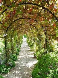 Growing Grapes Trellis Best 25 Grape Arbor Ideas On Pinterest Grape Vine Trellis