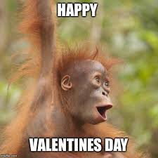 Happy Valentines Meme - happy orangutan imgflip
