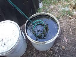fertiliser for native plants home made liquid fertiliser the greening of gavin