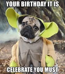 Pug Birthday Meme - your birthday it is celebrate you must doug the pug yoda meme