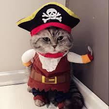 cat costume cat costume pirate suit cat clothes corsair costume