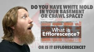 white mold or efflorescence in basements and crawl spaces youtube