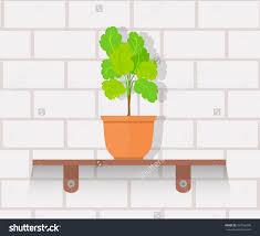 houseplant design flat concept house plant pot isolated indoor