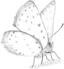 simple butterfly drawings