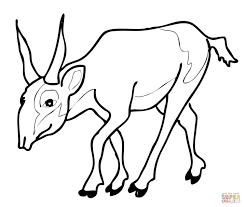endangered antelope saiga coloring page free printable coloring